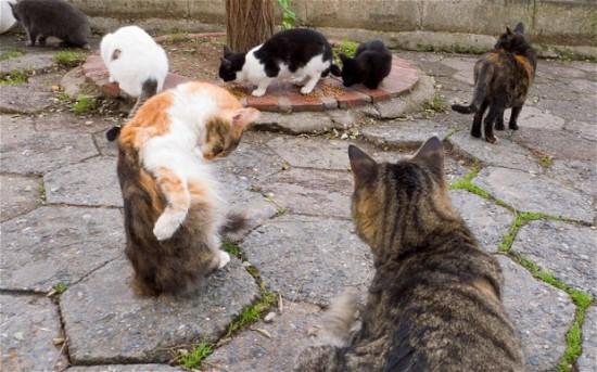 世界,可愛い,猫,画像,貼っていく038