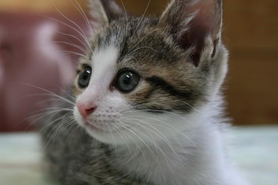 美しく,見とれ,猫,画像,貼っていく038