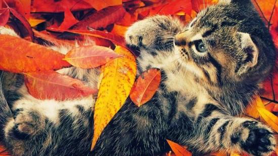 美しく,見とれ,猫,画像,貼っていく040