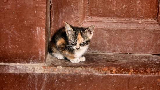 美しく,見とれ,猫,画像,貼っていく042