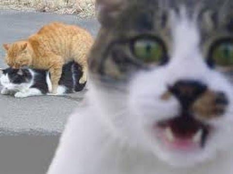 可愛すぎて,にやにや,猫,画像,貼っていく045