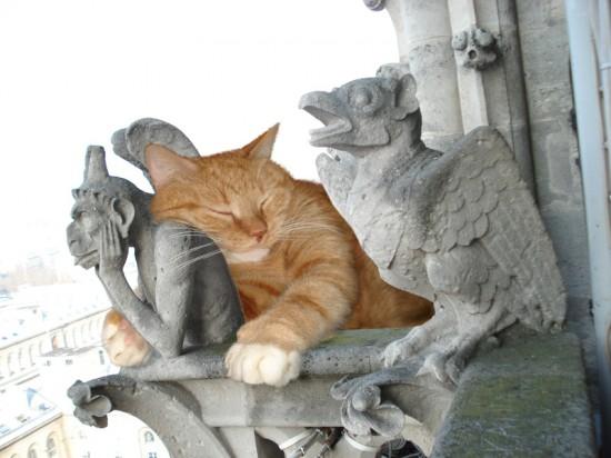 世界,可愛い,猫,画像,貼っていく048
