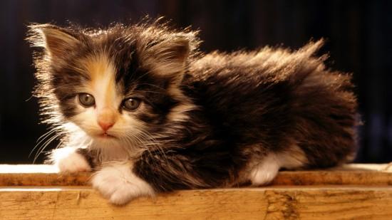 美しく,見とれ,猫,画像,貼っていく048