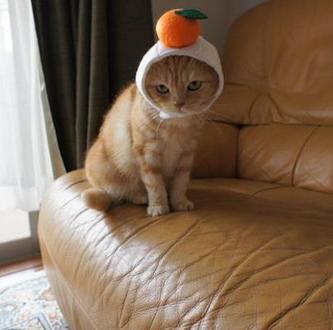 可愛すぎて,にやにや,猫,画像,貼っていく052