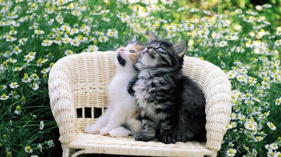 美しく,見とれ,猫,画像,貼っていく052