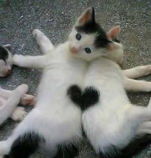 可愛すぎて,にやにや,猫,画像,貼っていく054