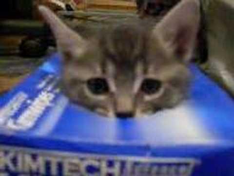 可愛すぎて,にやにや,猫,画像,貼っていく057