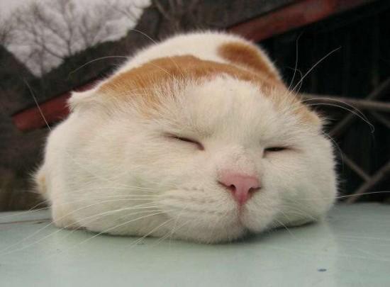 可愛すぎて,にやにや,猫,画像,貼っていく076