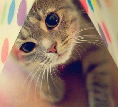 可愛すぎて,にやにや,猫,画像,貼っていく077