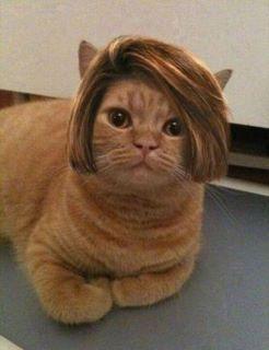 可愛すぎて,にやにや,猫,画像,貼っていく083