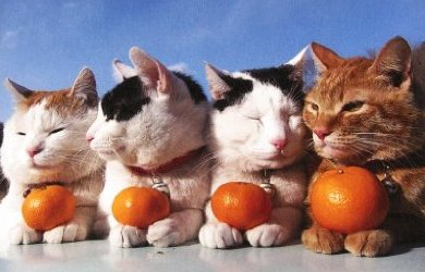 可愛すぎて,にやにや,猫,画像,貼っていく105