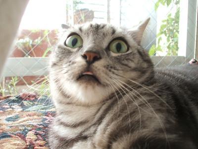 可愛すぎて,にやにや,猫,画像,貼っていく107