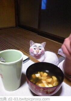 可愛すぎて,にやにや,猫,画像,貼っていく118