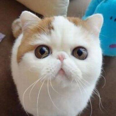 可愛すぎて,にやにや,猫,画像,貼っていく123