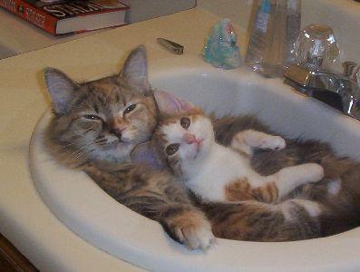 可愛すぎて,にやにや,猫,画像,貼っていく125