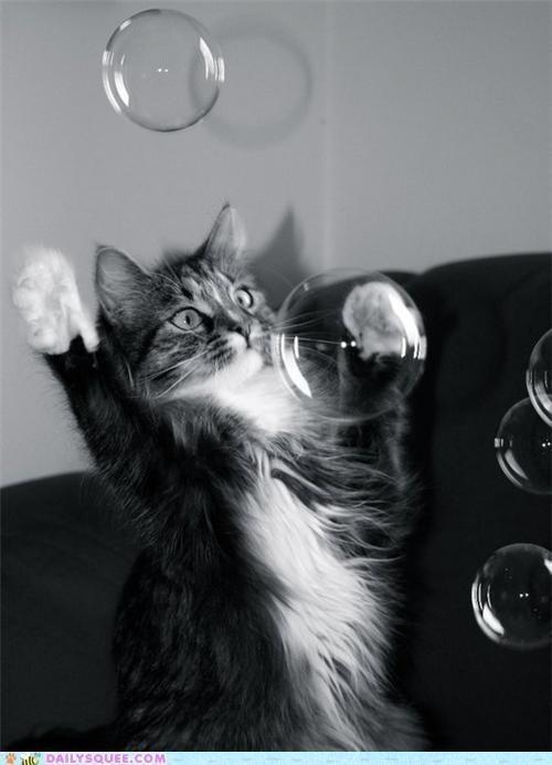ネコ,シャボン玉,画像,貼っていく001