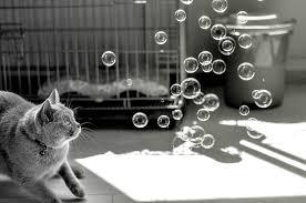 ネコ,シャボン玉,画像,貼っていく004