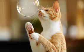 ネコ,シャボン玉,画像,貼っていく005