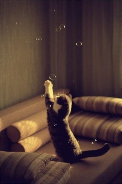 ネコ,シャボン玉,画像,貼っていく007