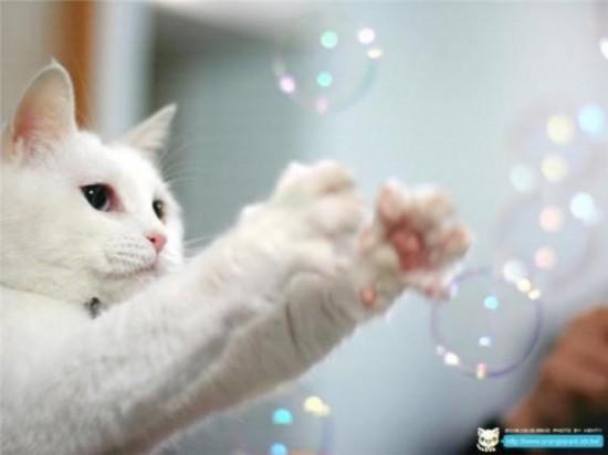 ネコ,シャボン玉,画像,貼っていく009
