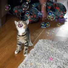ネコ,シャボン玉,画像,貼っていく010