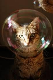 ネコ,シャボン玉,画像,貼っていく015