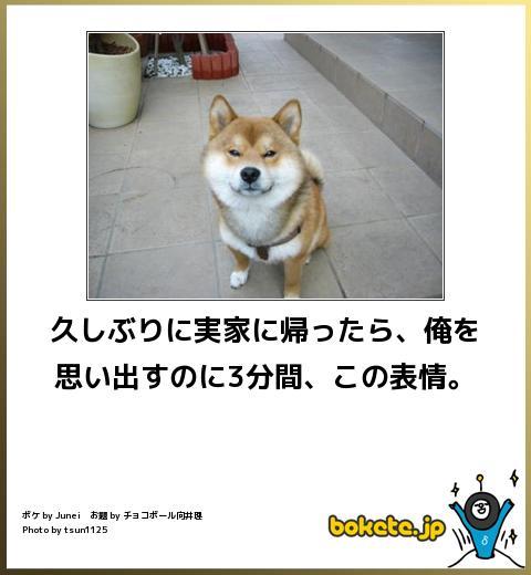 omoshiro379