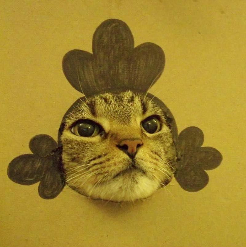 クスッ,笑える,猫,面白画像,まとめ002