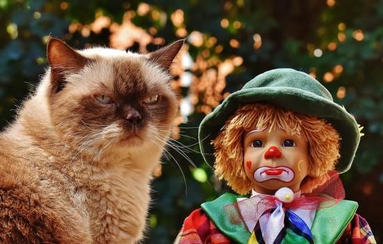 クスッ,笑える,猫,面白画像,まとめ003