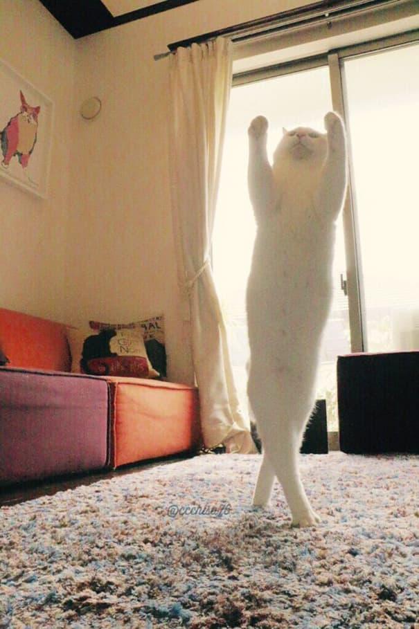 クスッ,笑える,猫,面白画像,まとめ004