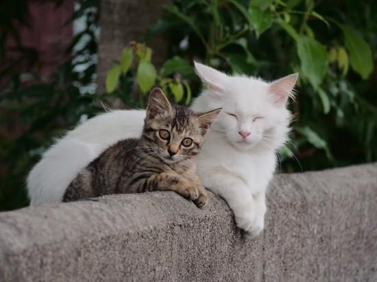 可愛い,萌える,猫,画像,貼っていく