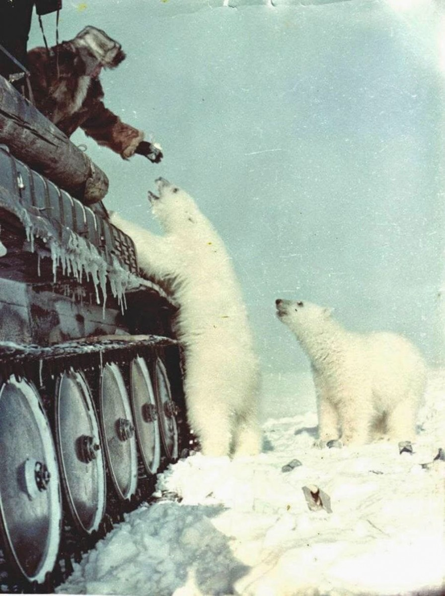 ほのぼの,クマ,画像,貼っていく
