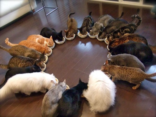 まん丸,猫,画像,貼っていく