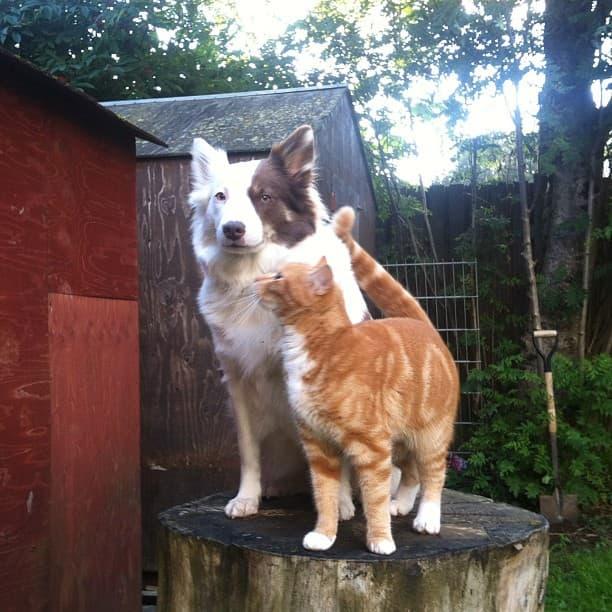 ホコホコ,犬,猫,仲良し,画像,まとめ