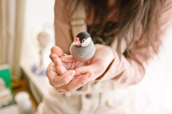 癒される,手乗り,ペット,動物,画像,まとめ