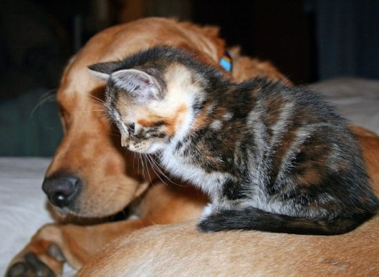可愛すぎ,ネコ,ねこ,猫,画像,まとめ