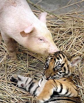 ほっこり,癒される,動物,仲良し,画像,まとめ