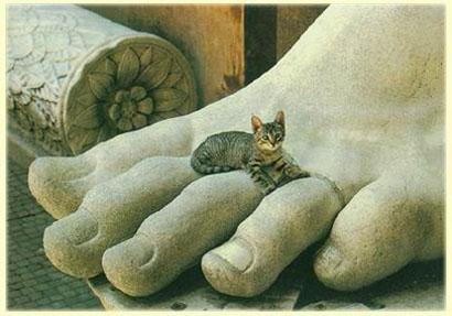 可愛い,ネコ