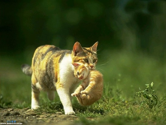 癒し,子猫,画像