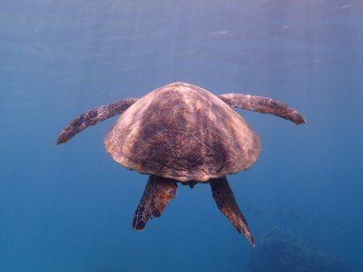 初めてでも怖くない!ウミガメにに会えるスキューバダイビング
